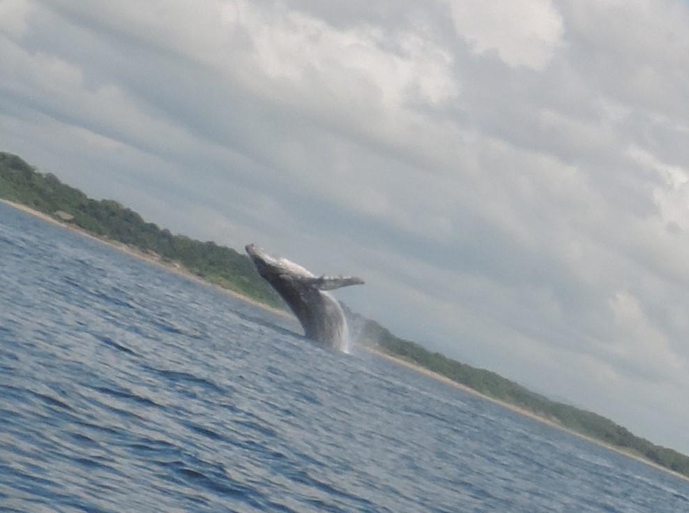 Les baleines arrivent !!!
